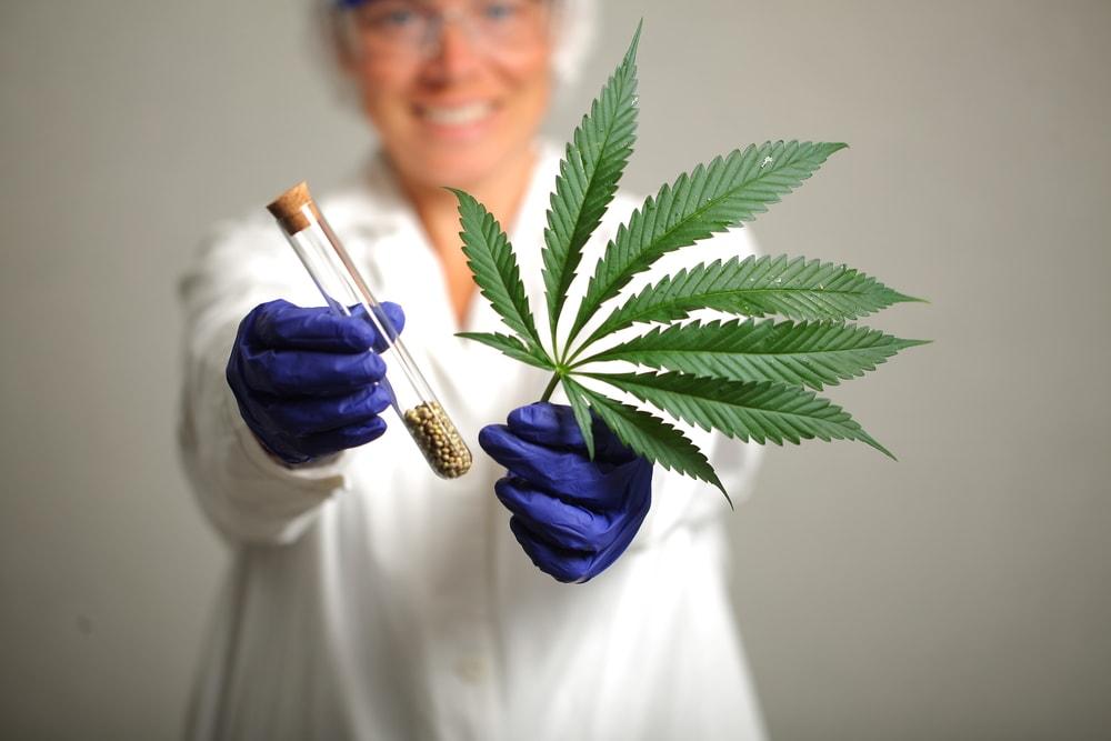 How to Get a Maryland Medical Marijuana Card