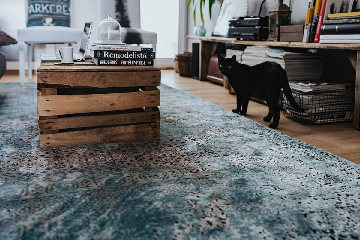 Why Should You Opt For Professional Carpet Cleaning Services Instead Of Doing It Yourself?