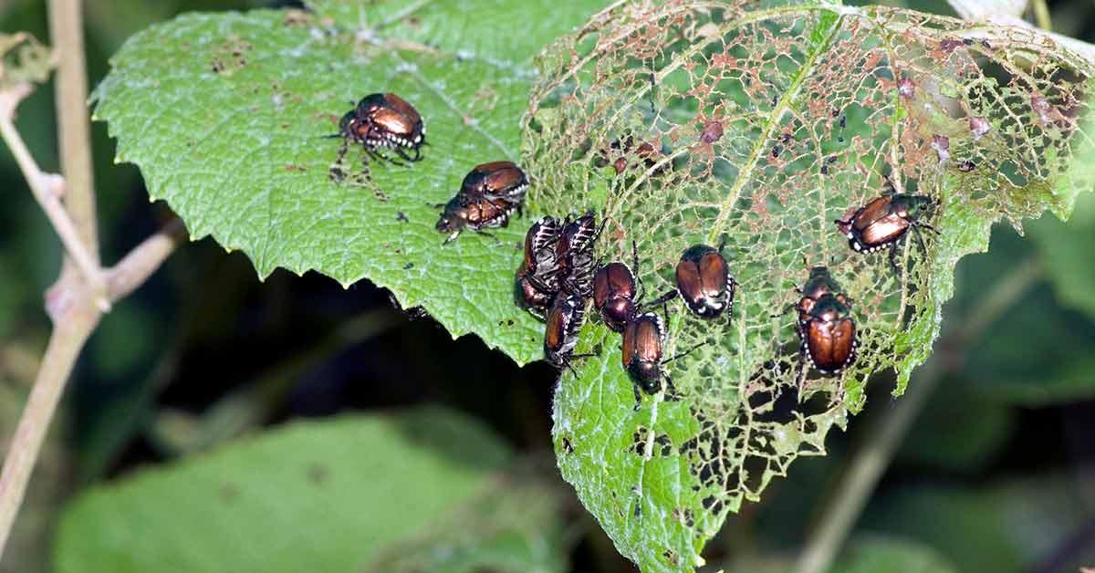 How Do Crop Pests Work?